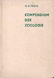 Freye,Hans-Albrecht  Kompendium der Zoologie