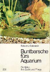 Goldstein,Robert J.  Buntbarsche fürs Aquarium. Cichliden-ihre Zucht und Pflege