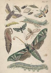 Reichenbach,A.B.  Der Schmetterlingsfreund