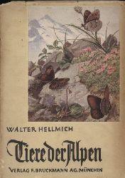 Hellmich,Walter  Tiere der Alpen. Ein Wegweiser für Bergsteiger