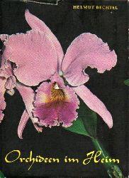 Bechtel,Helmut  Orchideen im Heim