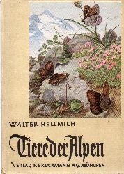 Hellmich,Walter  Tiere der Alpen