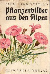 Götting,Ferdinand  Pflanzenbilder aus den Alpen