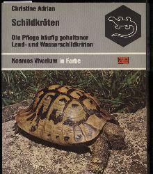 Adrian,Christine  Schildkröten