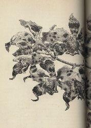 Linden,Lucien und A.Gogniaux und G.Grignan  Les Orchidees exotiques et leur culture en Europe