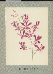 Beyer,Kurt+Karl H.Meyer  Orchideen