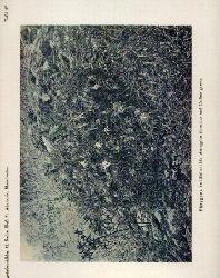 Adamovic,L.  Vegetationsbilder aus Mazedonien