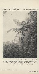 Brockmann-Jerosch,H.+ M.  Jamaika