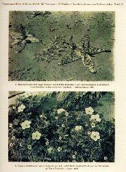 Heumann,Martin+Hubert Winkler  Charakterpflanzen aus Südwest-Afrika