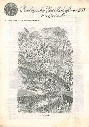 Zoologische Gesellschaft von 1858 Frankfurt a.M.  Mitteilungen an unsere Mitglieder April / Mai 1972