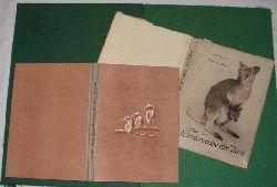 Adolf Heilborn, Friedrich Böhme  Aus der Kinderstube der Tiere