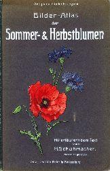 Bilder-Atlas der Sommer- & Herbstblumen.