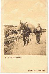 A Donkey Loaded. Carte postale Correspondance. Seriennummer 146.