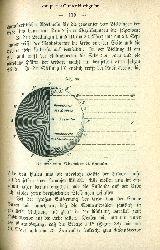 Lehmann, Paul:  Die Erde und der Mond.