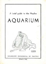 Acquario di Napoli  Kurzführer (Zeichnung Oktopus)