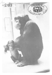 Zoo Saarbrücken  Zeitung der Freunde des Zoos, Ausg. 2, 1983