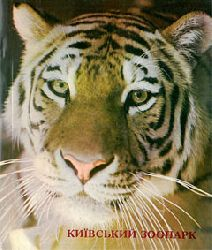 Zoo Kiew, Ukraine  Bildband (Tiger)