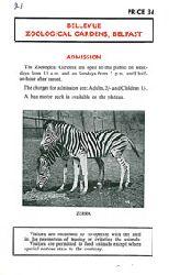 Belfast Zoo/ Bellevue Zoolog. Gardens  Bellevue Zoological Gardens, Faltblatt (2 Zebras)