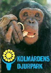 Zoo Kolmarden  Kolmardens Djurpark (Schimpanse)