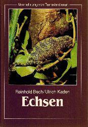 Bech, Reinhold und Ulrich Kaden  Vermehrung von Terrarientieren. Echsen