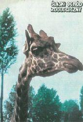 Zoo Silesia in Chorzow, Polen  Slaski Ogrod Zoologiczny (Faltplan, versch. Tierbilder) (Titel: Giraffe)