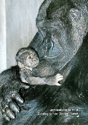 Zoo Basel   Jahresbericht 1998