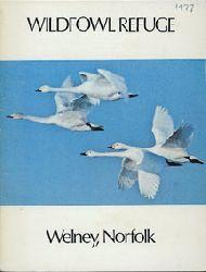 Welney Wildfowl Refuge  Guide (fliegende Schwäne)
