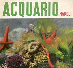 Acquario di Napoli  Wegweiser (Seesterne, etc.)