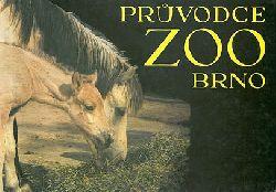 Zoo Brno, Tschechien  Parkführer (Tarpane)