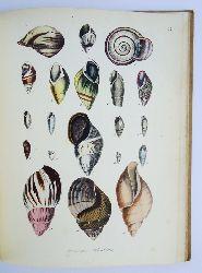 Berge, F.  Conchylienbuch oder allgemeine und besondere Naturgeschichte der Muscheln und Schnecken nebst der Anweisung sie zu sammeln, zuzubereiten und aufzubewahren.