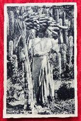 Ansichtskarte reetings from Jamaica. Cactus for Fencing, Banana, sugar cane (geschrieben v. einem Herbert an Dr. Gabriele Wülker (s. Beschreibung unten)