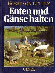 Luttitz, Horst von  Enten und Gänse halten