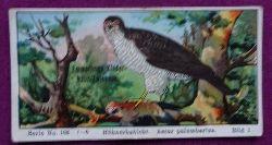 Reklamebild / Kaufmannsbild / Sammelbild Emmerlings Kinder-Nähr-Zwieback Serie No. 108 Bild 1 Hühnerhabicht