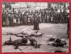 """Bauer, Erich  Original-Fotografie von Erich Bauer """"Opferszene von Rindern in Afrika"""" (umseitig Stempel v. Erich Bauer Neureut)"""