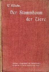 Bölsche, Wilhelm; Der Stammbaum der Tiere Mit zahlreichen Illustrationen von Willy Planck 7. Auflage
