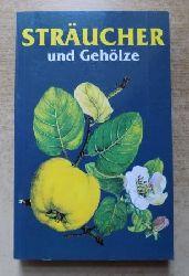 Elstner, Erich F.  Sträucher und Gehölze.