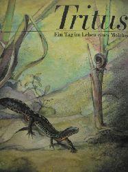 Karl Meißner/Wolf-Ullrich Friedrich (Illustr.) TRITUS. Ein Tag im Leben eines Molches. 3. Aufl.