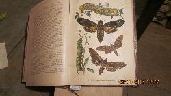 """""""Eckstein Dr. K.""""  """"Die Schmetterlinge ihr Bau, ihre Lebensweise und wirtschaftliche Bedeutung nebst Anleitung zur Beobachtung, Aufzucht und zum Sammeln."""""""